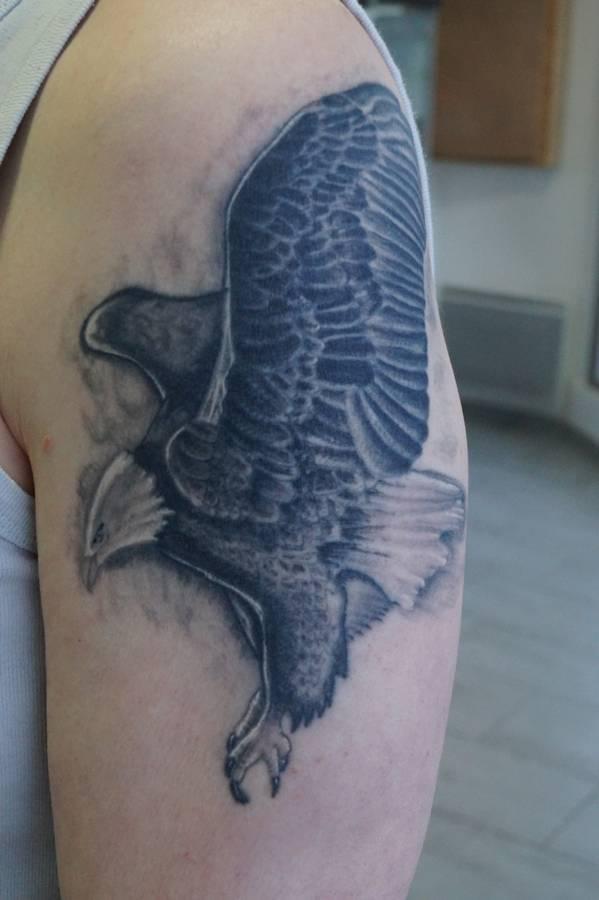 noir-ombrage-epaule-aigle-royal-22